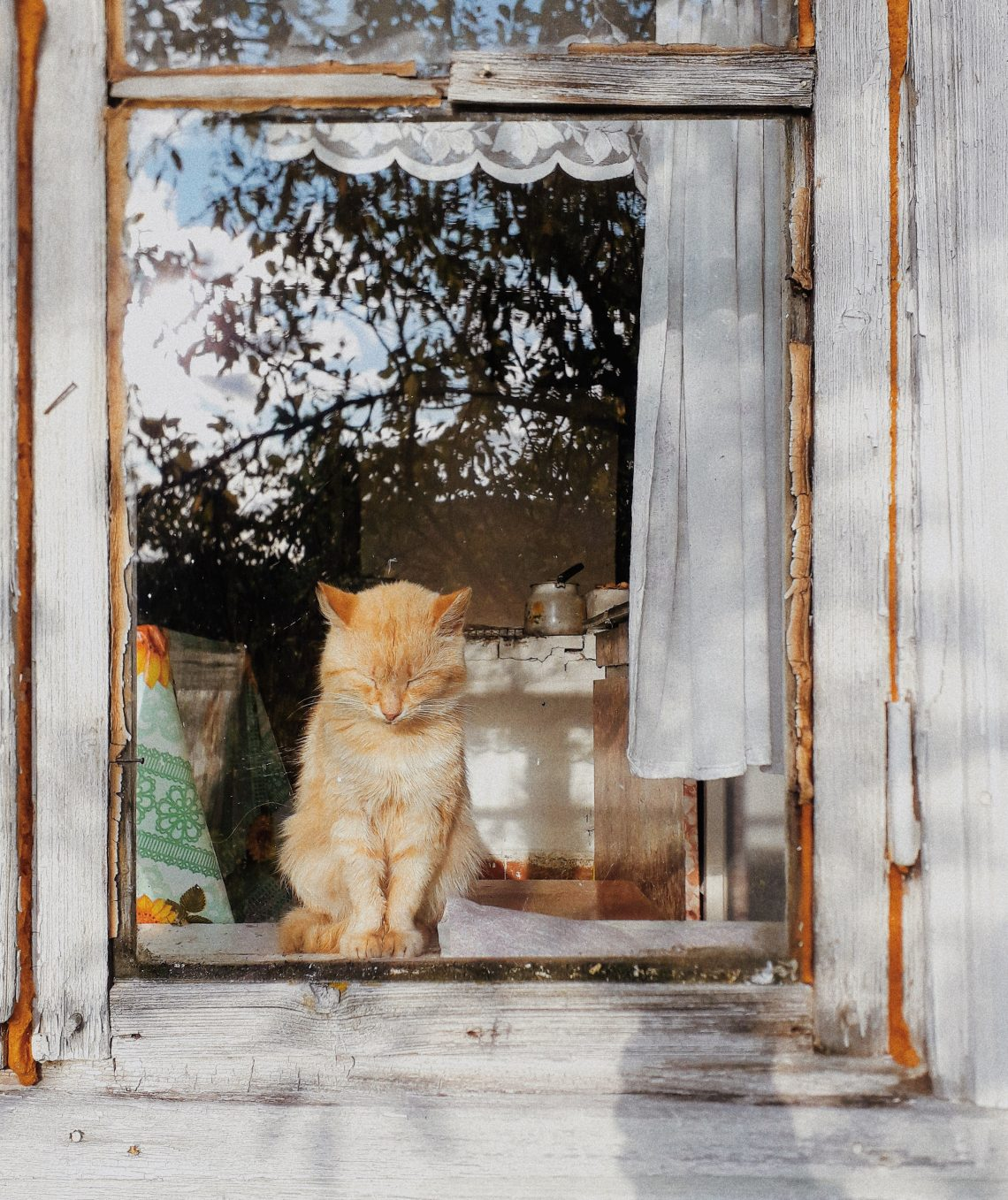 orange tabby cat inside closed glass window