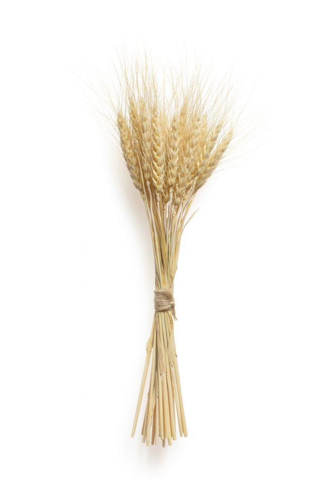 brown wheat in clear glass vase