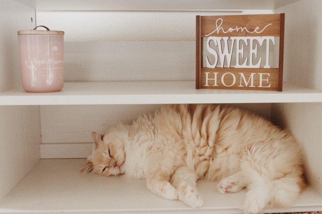 short-fur brown cat in white wooden shelf